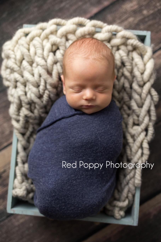 Levi | Seattle Newborn Photographer » Red Poppy Photography